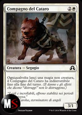 COMPAGNO DEL CATARO